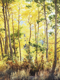 California, Sierra Nevada, Inyo Nf, Suns Rays Through Autumn Aspens Photographic Print by Christopher Talbot Frank