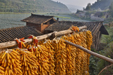 Corn Hanging to Dry in Old Farm House, China Kunming District Photographic Print by Darrell Gulin