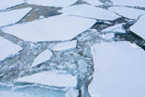 Antarctica. Near Adelaide Island. the Gullet. Ice Floes and Brash Ice Photographic Print by Inger Hogstrom