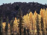 California, Sierra Nevada, Autumn Aspens in the Bishop Creak Area Photographic Print by Christopher Talbot Frank