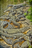 Aligators, Alligator Farm Zoological Park, St. Augustine, Florida Photographic Print by Rona Schwarz