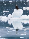 Alaska, Glacier Bay National Park. Bald Eagle on Iceberg Photographic Print by Jaynes Gallery