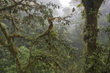Cloud Forest View, Monteverde Cloud Forest Reserve, Costa Rica Photographic Print by Thomas Wiewandt