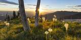 Beargrass at Sunset in the Swan Range, Flathead Valley, Montana Stampa fotografica di Chuck Haney