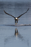 Bald Eagle Fishing Photographic Print by Ken Archer