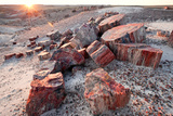 Alien Landscape, Petrified Logs, Petrified Forest National Park, Arizona Photographic Print by Susan Degginger