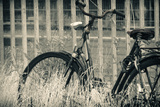 Abandoned Vintage Bicycle Photographic Print by Sheila Haddad