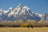 Horse and Grand Tetons, Moose Head Ranch, Grand Teton National Park, Wyoming, USA Photographic Print by Michel Hersen