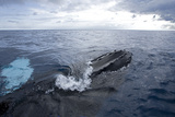 Atlantic Humpback Whale Surfaces, Caribbean Sea, Dominican Republic Photographic Print by Thomas Wiewandt
