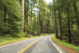 Driving Through Forest, Fall, Mt. Rainier National Park, Wa, USA Photographic Print by Stuart Westmorland
