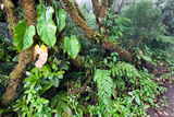 Monteverde Cloud Forest Reserve, Costa Rica Photographic Print by Susan Degginger