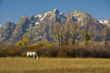 White Horse, Autumn, Grand Tetons, Grand Teton National Park, Wyoming, USA Photographic Print by Michel Hersen