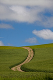 Back Country Road Through Spring Wheat Field Photographic Print by Terry Eggers