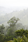 Cloud Forest North of Lake Arenal in Costa Ricas Northern Zone Photographic Print by Thomas Wiewandt