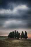 Olive Groves and Vineyards of the Monticiano Area Photographic Print by Terry Eggers