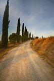 Tuscan Cypress Lined Back Road Photographic Print by Terry Eggers