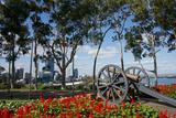 Australia, Perth. Kings Park. Fraser Avenue, Lemon Scented Gum Tree Photographic Print by Cindy Miller Hopkins