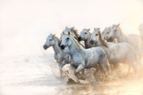 White Horses of Camargue Running in the Mediterranean Water at Sunrise Photographic Print by Sheila Haddad