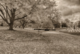 Crown Hill Cemetery, Indianapolis, Indiana Photographic Print by Rona Schwarz