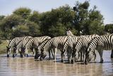 Namibia, Etosha National Park, Plain Zebra, Equus Burchellii, at Water Hole Photographic Print by Paul Souders