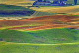 Palouse Area of Eastern Washington, USA Photographic Print by Stuart Westmorland