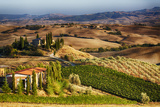 Vineyards Surround the Belvedere House Photographic Print by Terry Eggers