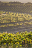 Australia, Fleurieu Peninsula, Mclaren Vale Wine Region, Vineyard View Photographic Print by Walter Bibikow