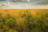 Kissimmee Preserve State Park, Florida Photographic Print by Maresa Pryor