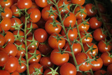 France, Centre, Chatillon Sur Loire. Fresh Vine Tomatoes at Market Photographic Print by Kevin Oke