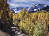 Colorado, Rocky Mountains, Dirt Road, Autumn Aspens in the Backcountry Photographic Print by Christopher Talbot Frank