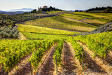 Vineyards in the Rolling Hills of Tuscany Photographic Print by Terry Eggers