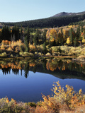 California, Sierra Nevada, Inyo Nf, Autumn Aspens Reflecting in a Pond Photographic Print by Christopher Talbot Frank