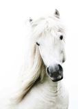 Crin Blanc Affiche par Blonde Attitude