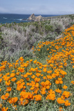USA, California, Near Big Sur, California Poppies on the Central Coast Photographic Print by Rob Tilley