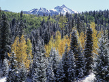 Colorado, San Juan Mts, First Snow and Fall Colors of the Forest Photographic Print by Christopher Talbot Frank