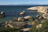 Boulders Beach African Penguins Colony. Western Cape, South Africa Photographic Print by Pete Oxford