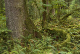 Olympic National Park, Hoh River Valley Photographic Print by Ken Archer