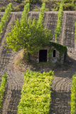 Small Rock Shed in the Vineyards in the Rolling Hills of Tuscany Photographic Print by Terry Eggers
