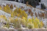 Grand Teton National Park, Autumn Aspen Snow Photographic Print by Ken Archer