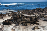 Cape Fur Seal Colony. Western Cape, South Africa Photographic Print by Pete Oxford