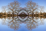 Photo Illustration of Oak Trees Reflecting Off Mountain Lake Photographic Print by James White