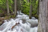 Jackson Creek in Glacier National Park, Montana, USA Photographic Print by Chuck Haney