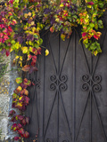 Italy, Tuscany, Contignano. Door Surrounded by Fall Colored Ivy Photographic Print by Julie Eggers