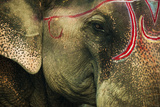 India, Bihar, Patna, Sonepur Mela Cattle Fait, Painted Elephant Photographic Print by Anthony Asael