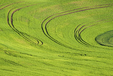 Tilling Pattern in Rolling Hills of Wheat Photographic Print by Terry Eggers