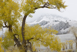 Yellowstone National Park, Lamar Valley Photographic Print by Ken Archer