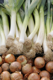 France, Centre, Chatillon Sur Loire. Onions and Leeks at Farmer Market Photographic Print by Kevin Oke