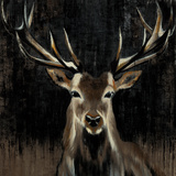 Joven ciervo Póster por Liz Jardine