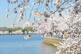 Washington DC - Cherry Blossom Festival at Tidal Basin in Spring Photographic Print by  Orhan