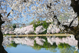 Spring in Washington DC - Cherry Blossom Festival at Tidal Basin Photographic Print by  Orhan
